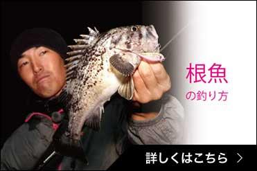 根魚の釣り方
